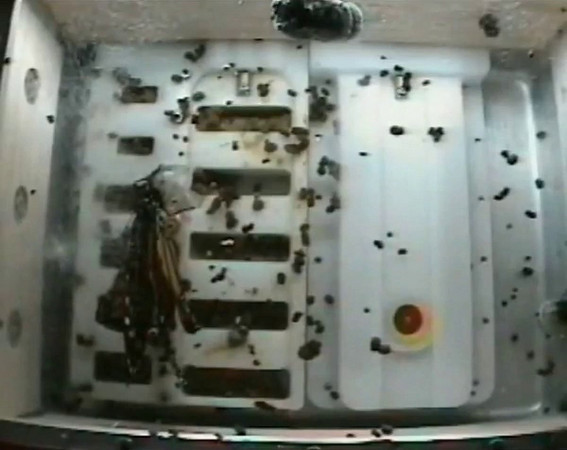 Monarch Emergence, 12-04-09, BioServe, Butterflies in Space.mp4