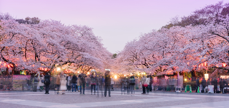 Ueno-koen Park during cherry blossom season