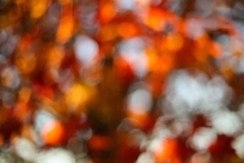 ManeyDigital_Autumn Leaves-12.jpg