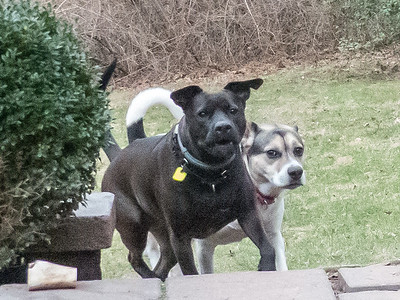 2018-12-30 Shorty and Scout