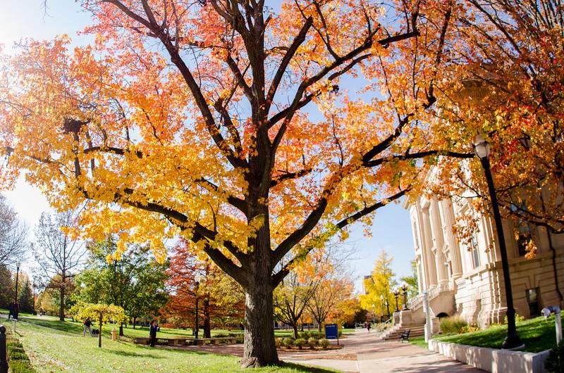 fall-pic1.jpg