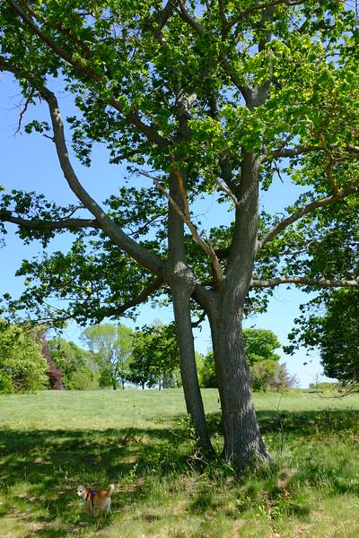 tree-fusion_20027572159_o.jpg