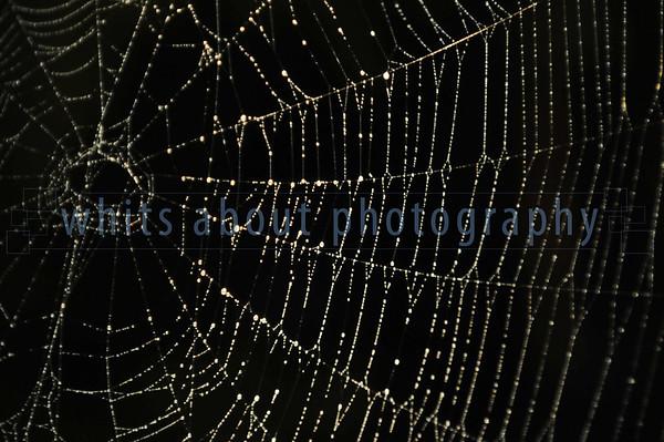 web of imagination