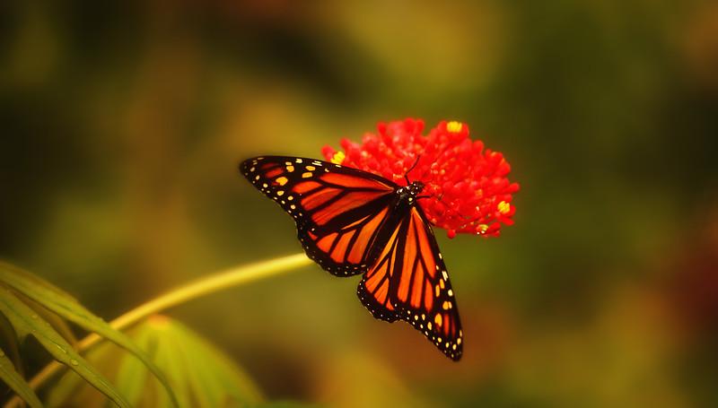 Butterfly-106.jpg