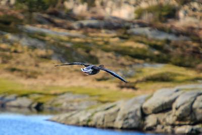 Wildlife at Tjeldstø