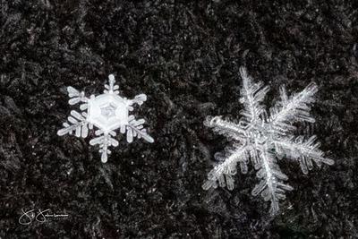 snowflakes-1274.jpg