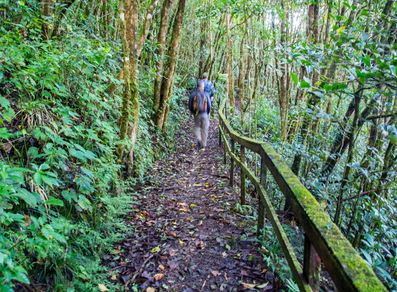 Costa Rica_Rainforest-4.jpg