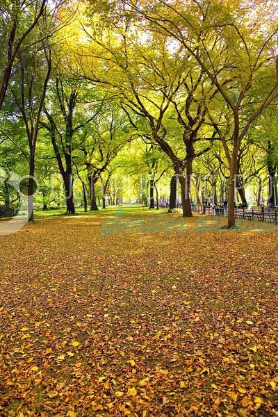 Park-Leaves-Painting_batch_batch.jpg