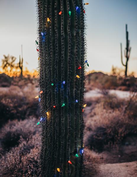 HolidayMini-SunshynePix-1196.jpg