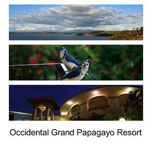 Occidental Grand Papagayo Resort