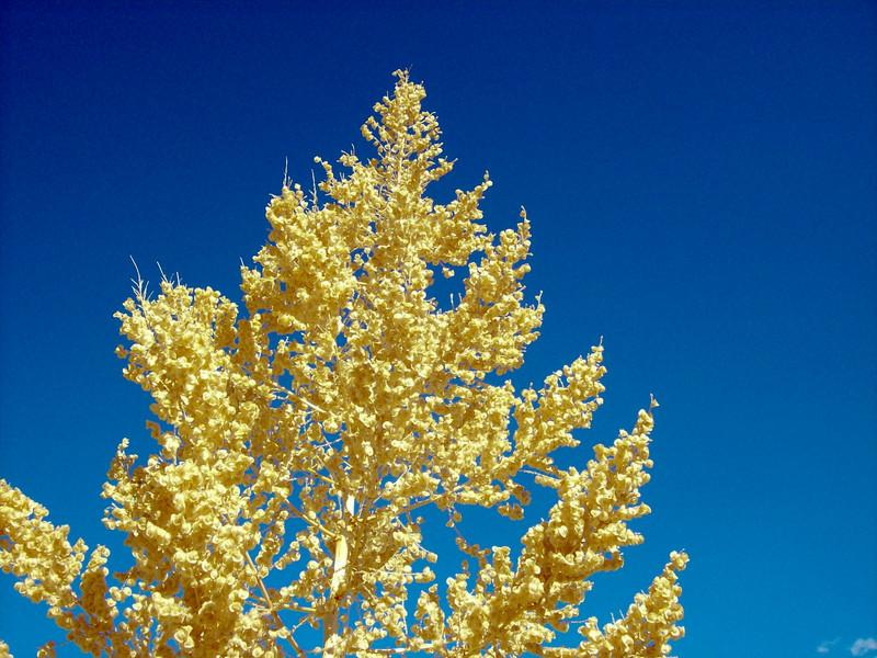 Joshua tree NP Mastadon Trail 4.jpg