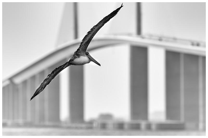 skyway Pelican 1-1.jpg