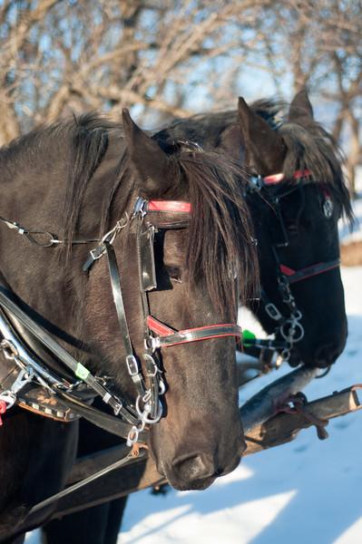 HorseRide-37.jpg