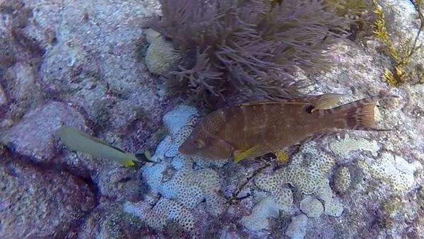 Ciesla-GOPR7044-1 - KC Ugly Fish 3.jpg