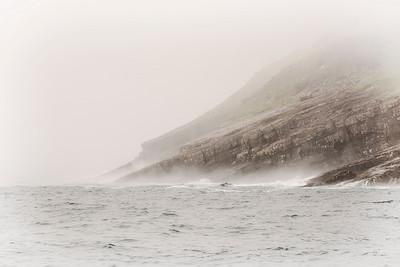 Newfoundland Reunion