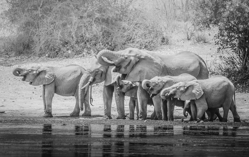 The Watering Hole