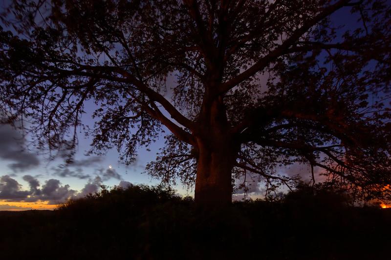 Sunset Baoba2.jpg