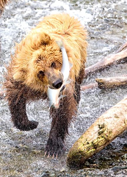 Alaska_2013_FH0T5193.jpg