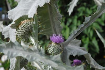 2009_08_Botanic_Garden_Goettingen