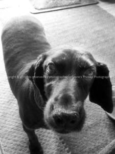 042-dog_storm-ankeny-28jun12-09x12-sepia1-0515