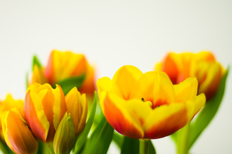 Tulip Light Box_15.jpg