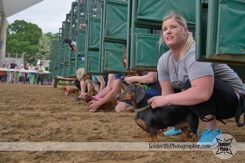 Belterra Park 2017 Wiener Dog Races-17.jpg