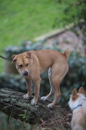 Upper Douglass Dog Park