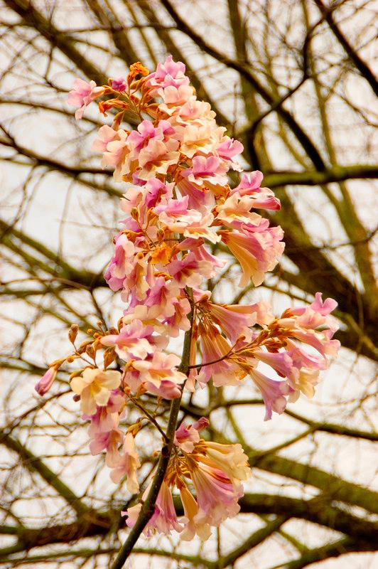Spring_DSC_4421.jpg