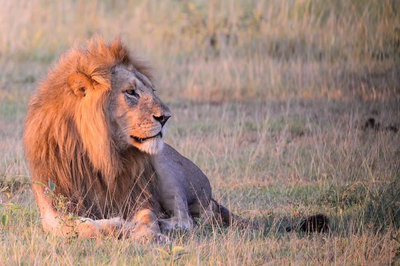 20160215__KET7242_Serengeti_Day_7.jpg