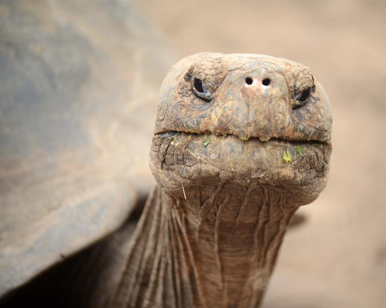 Tortoise1 8x10.jpg