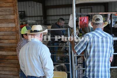 Swine Show at Trinity Community Fair 15