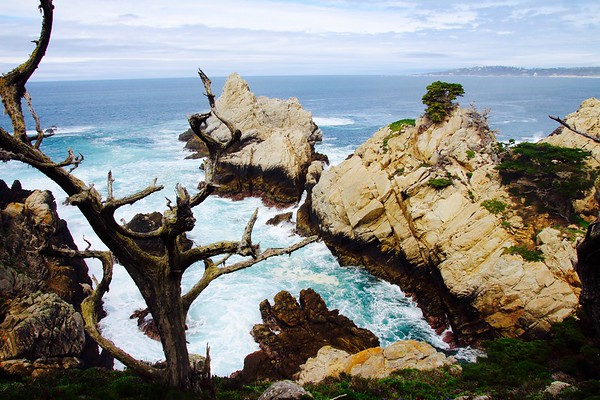 Point Lobos State Reserve (Carmel)