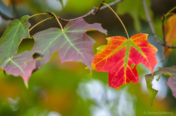 Autumn colors 2014