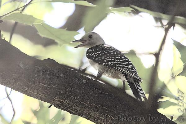 2007-07 Birding Misc