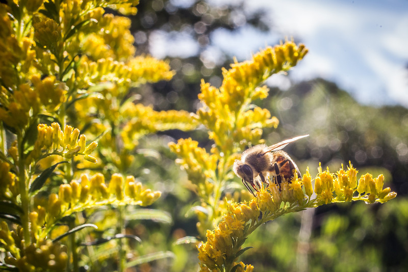The plight of the honeybee