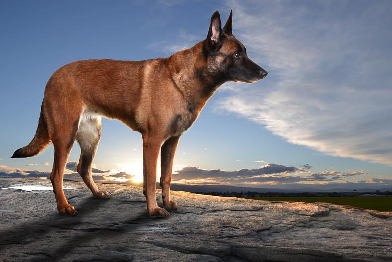 Browndog-2.jpg