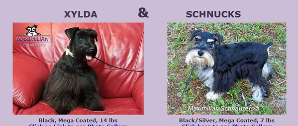 Xylda & Schnucks Puppies, DOB 5/25/2021