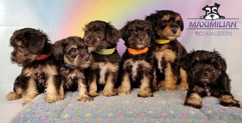 Yanabell Pups 006.jpg