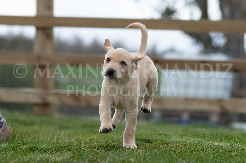 Weika Puppies 24 March 2019-6599.jpg