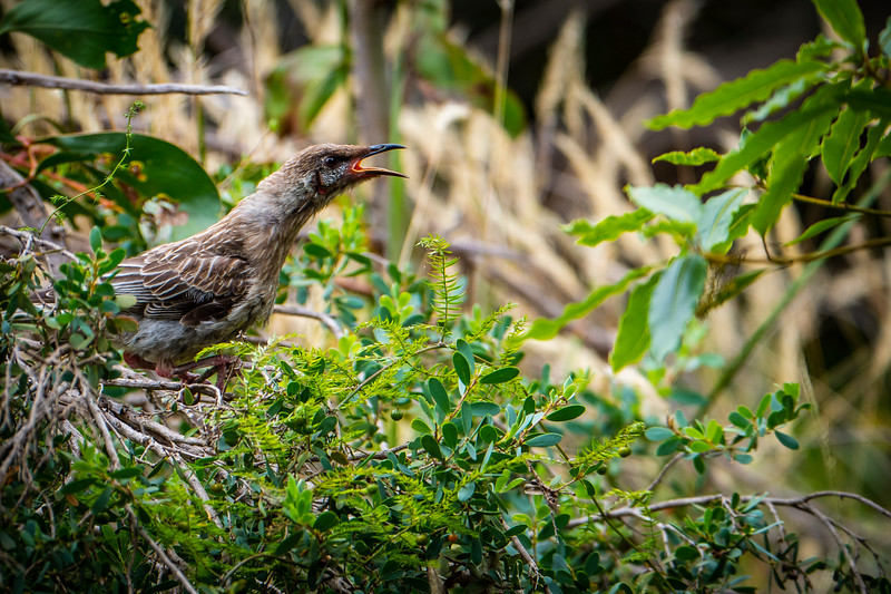 011119 W bird  _1.JPG