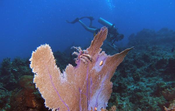 Dive/CSS/Ocho Rios/Jamaica - Dec., 2009