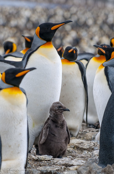 Antarctic-165