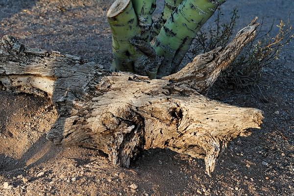 2007 Misc., Cactus, Etc