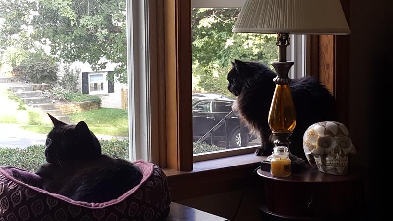 two black kitties