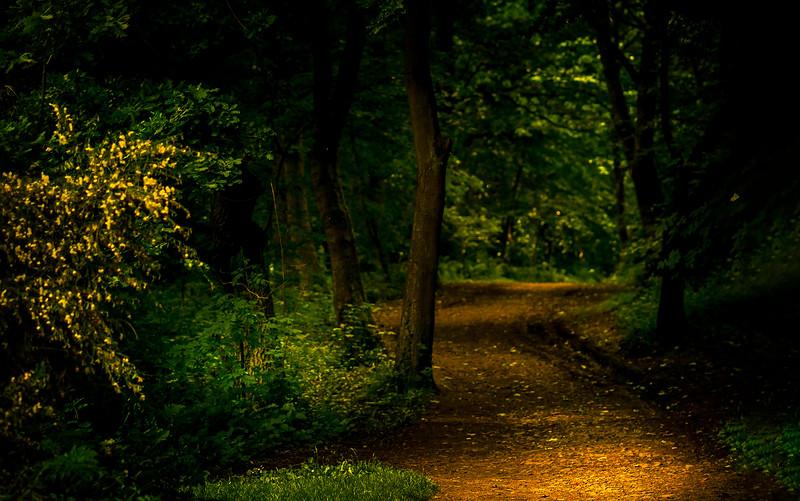 Forest Shadows-180.jpg