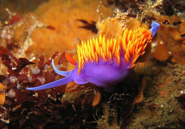 California Diving