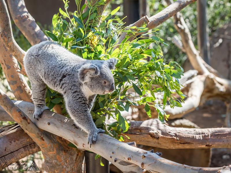 San Diego Zoo and Safari Park-014.jpg