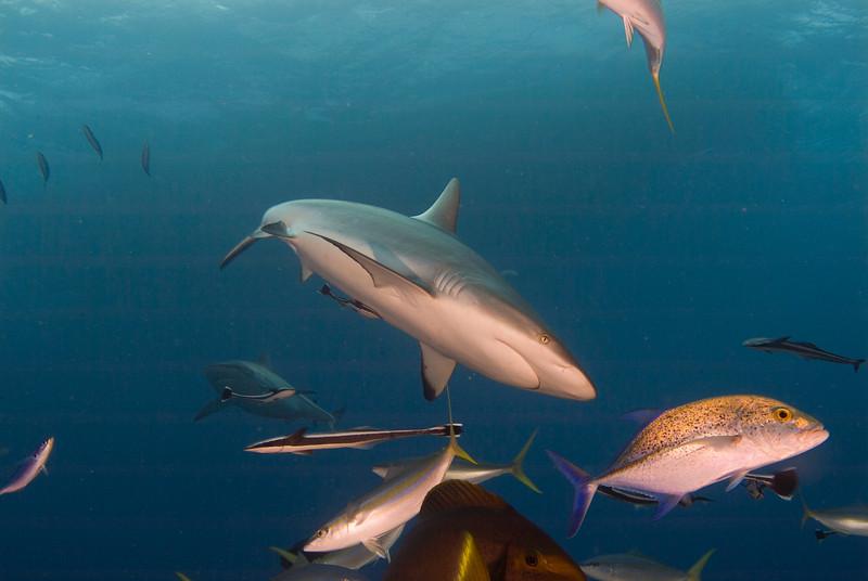 shark 3.jpg