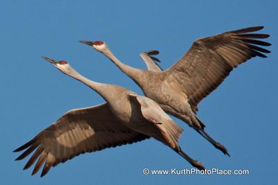 2009 Cranes - Part 2