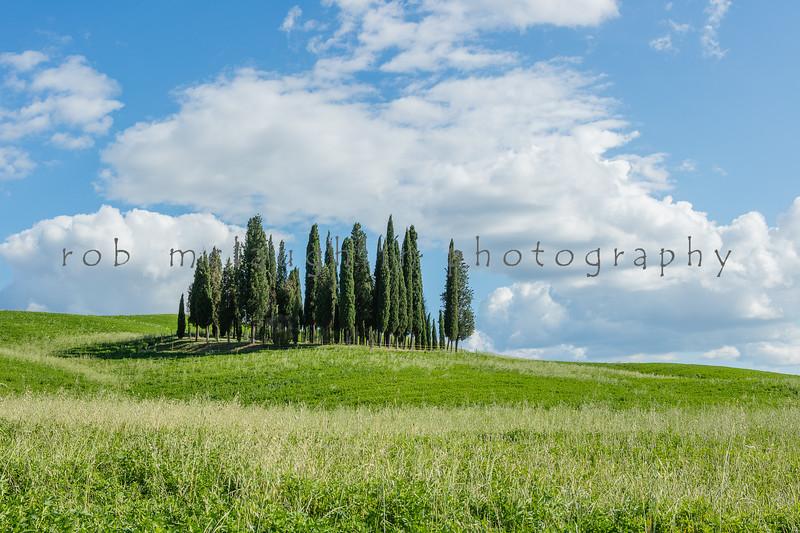 Cypress Circle , San Quirico D'Orcia , Tuscany